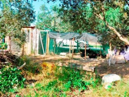 Didim Balat 832 M² Arsalı Satılık Köy Evi